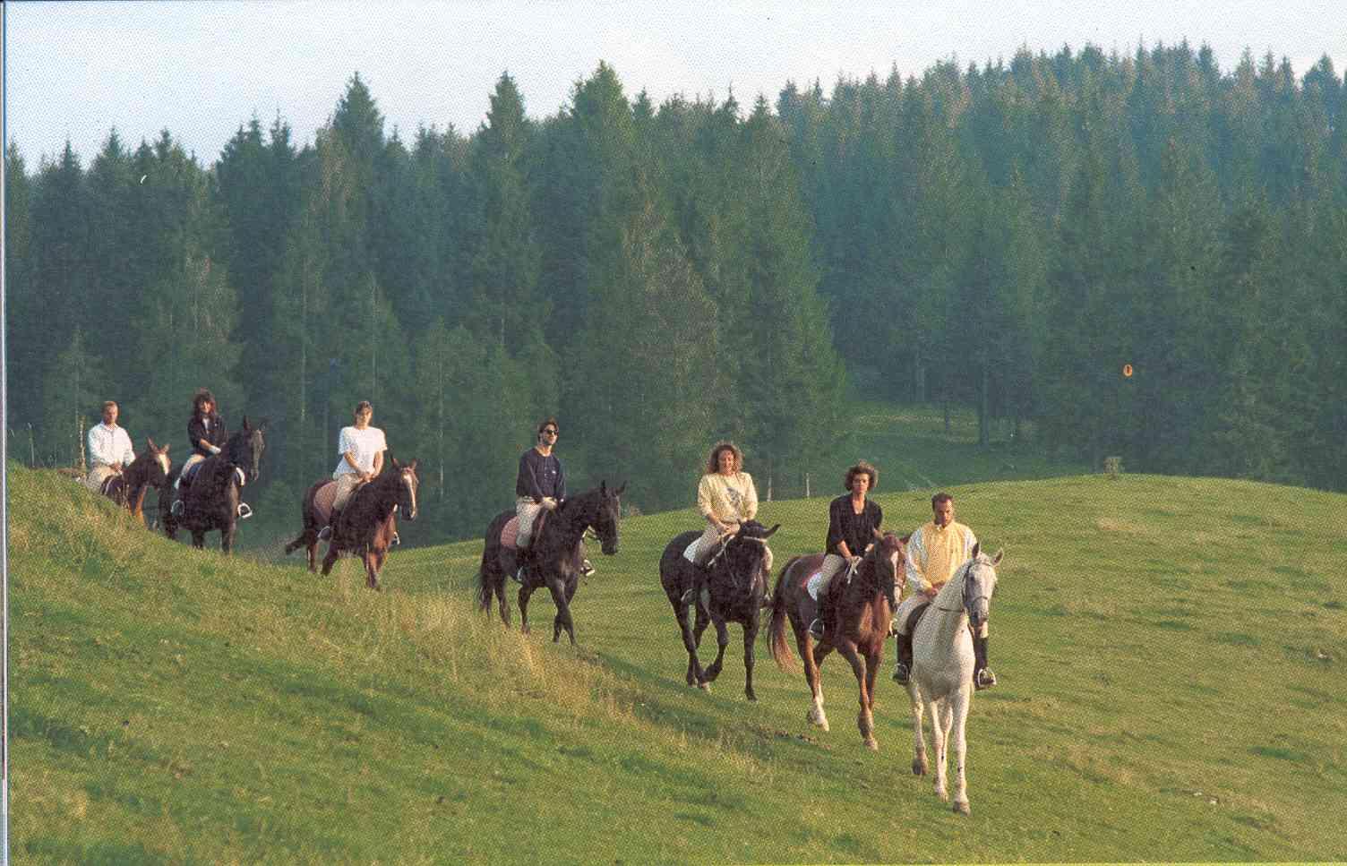 [Immagine: Passeggiata-a-cavallo.jpg]